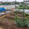 江戸川区 区民農園
